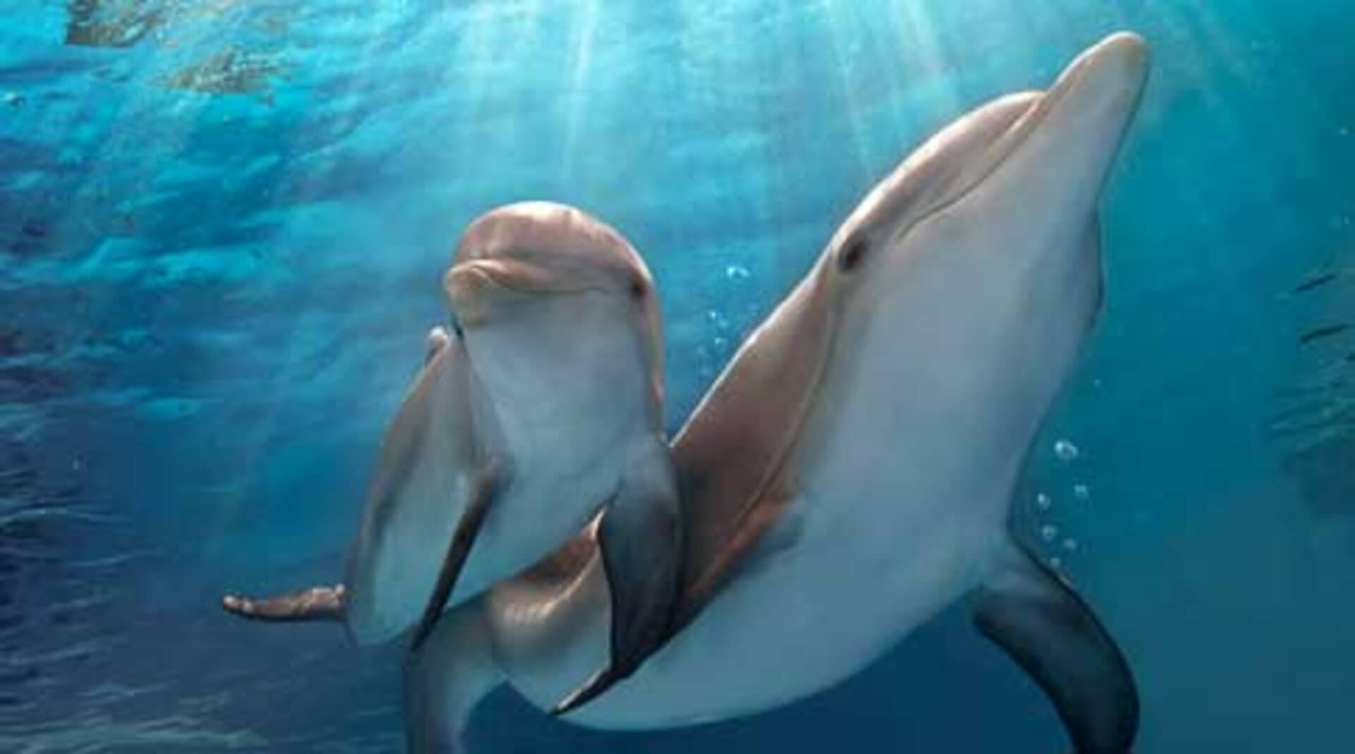 Dolphin Tale 2 - Image 29