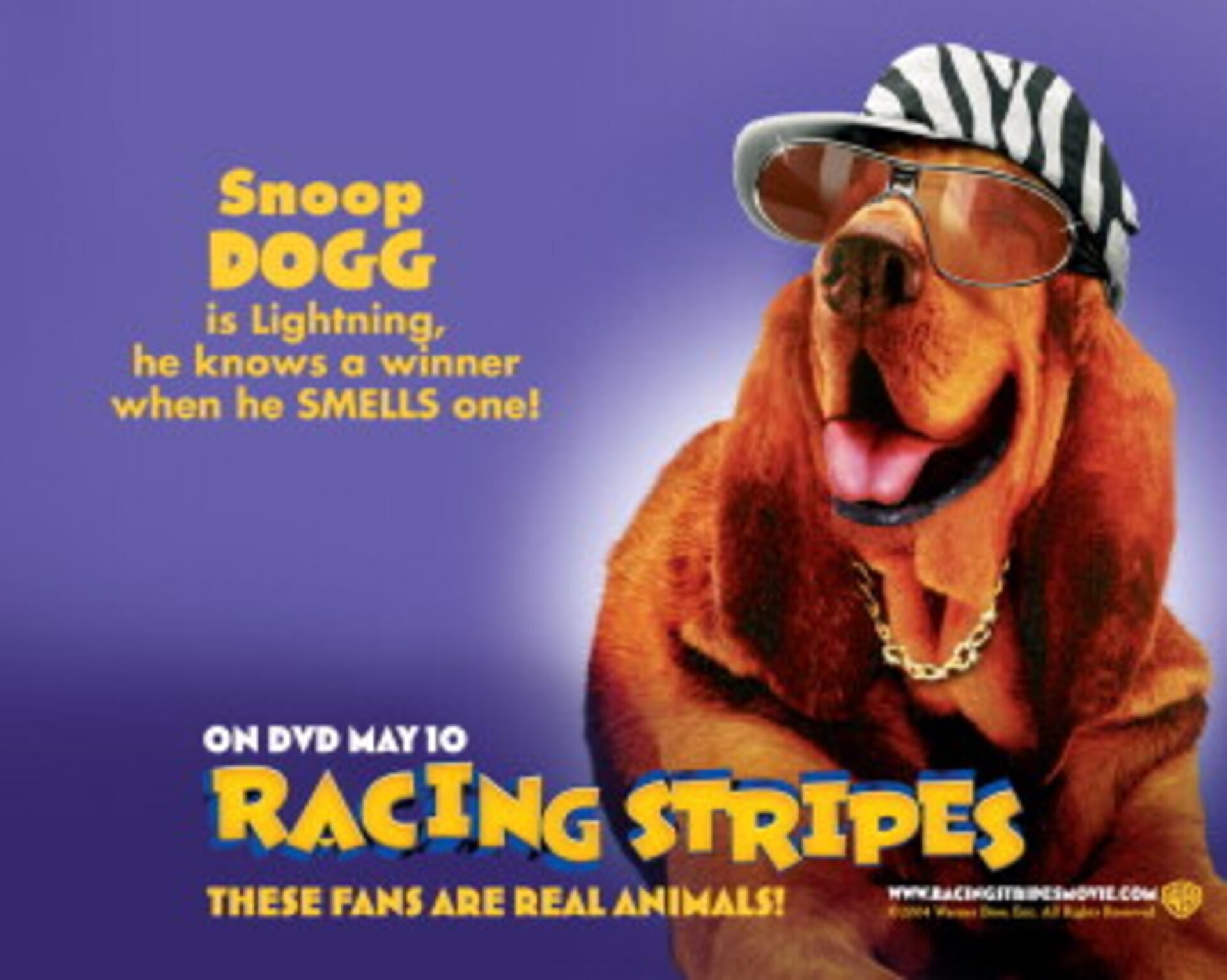Racing Stripes - Image 27