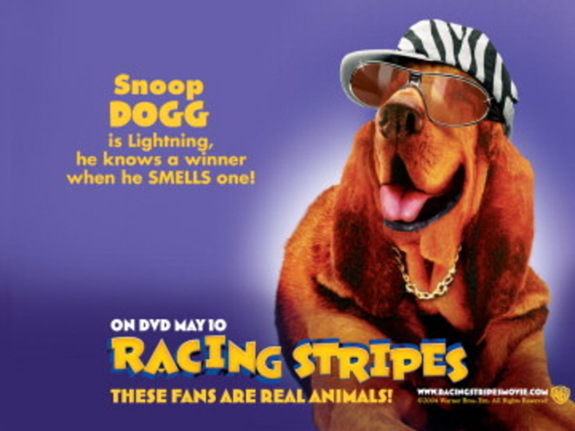 Racing Stripes - Image 29