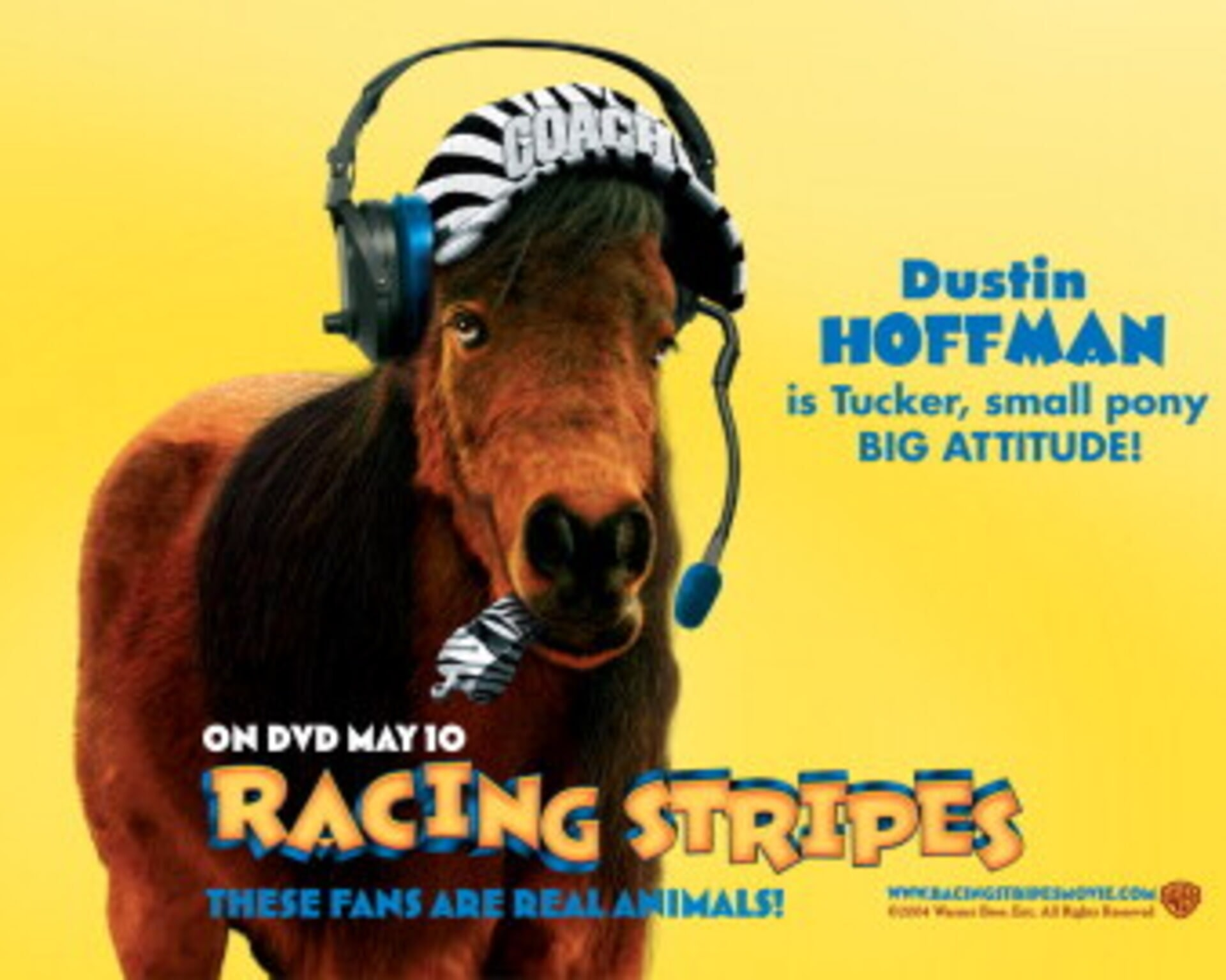 Racing Stripes - Image 33