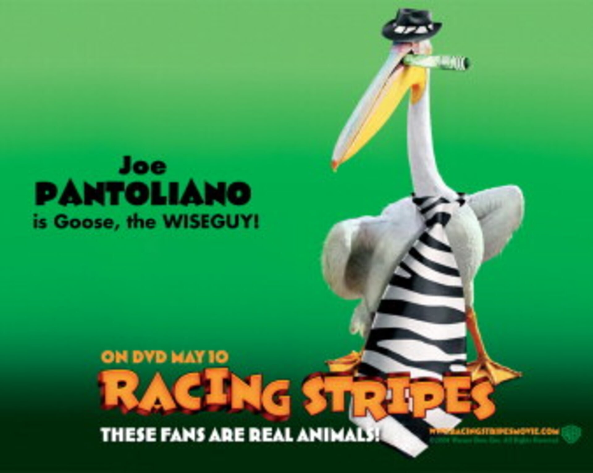 Racing Stripes - Image 5