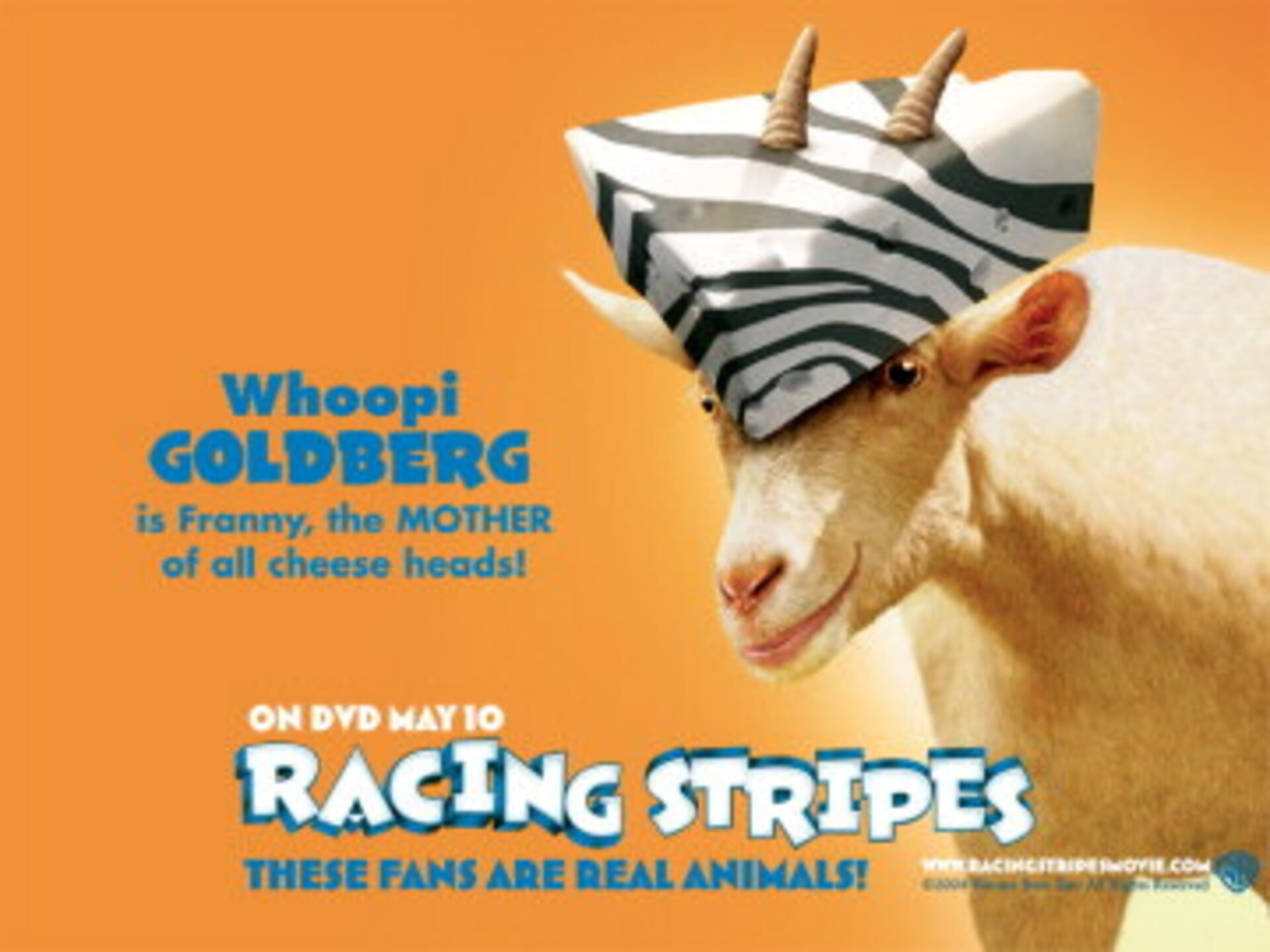Racing Stripes - Image 46