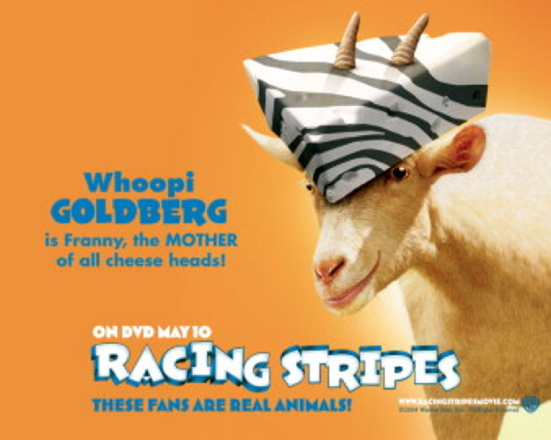 Racing Stripes - Image 55
