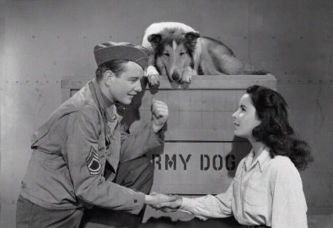 Courage of Lassie - Image - Image 4