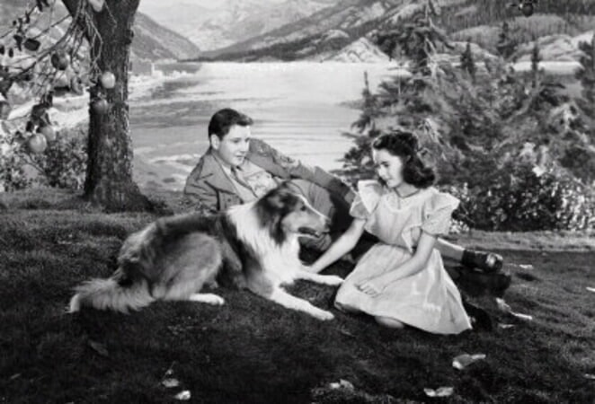Courage of Lassie - Image - Image 5