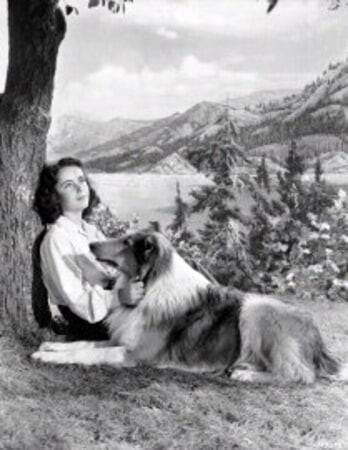 Courage of Lassie - Image - Image 7