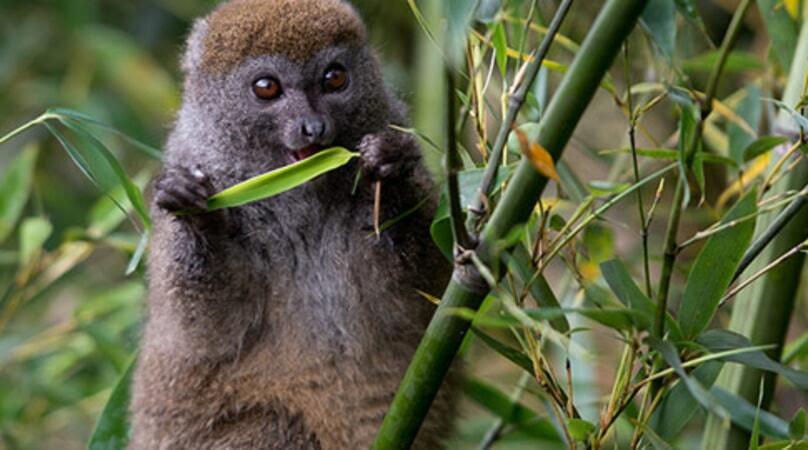 Island of Lemurs: Madagascar - Image - Image 11