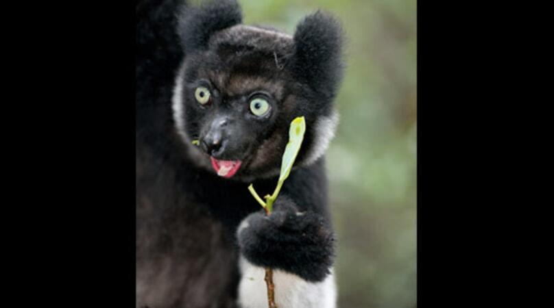 Island of Lemurs: Madagascar - Image - Image 12