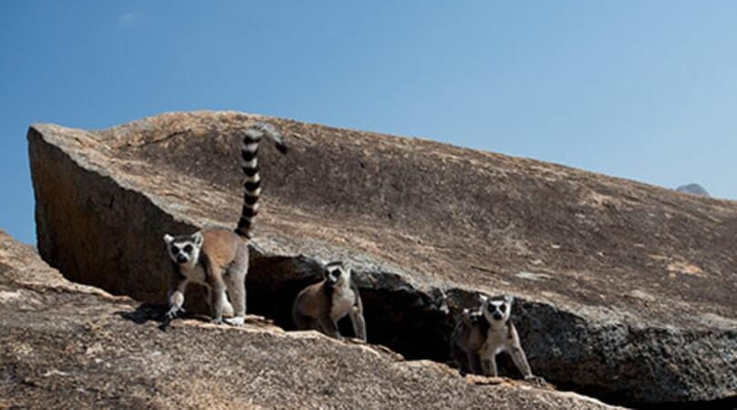 Island of Lemurs: Madagascar - Image - Image 13