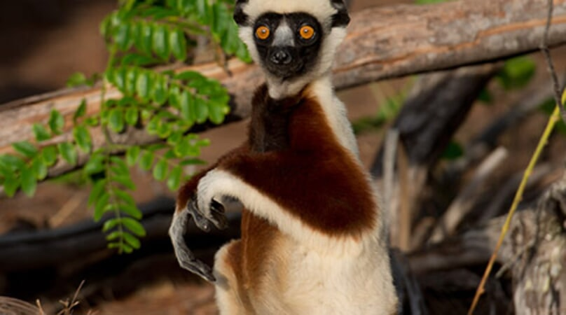 Island of Lemurs: Madagascar - Image - Image 20