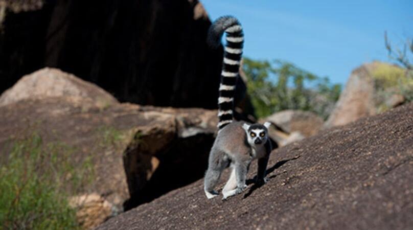 Island of Lemurs: Madagascar - Image - Image 23