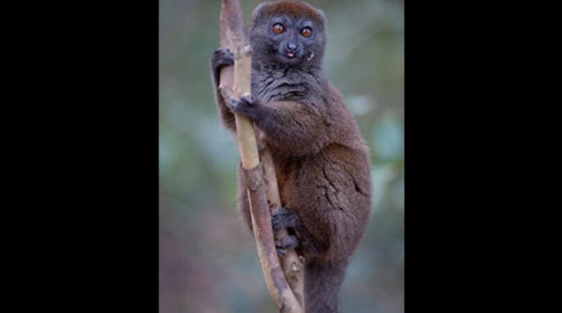 Island of Lemurs: Madagascar - Image - Image 27