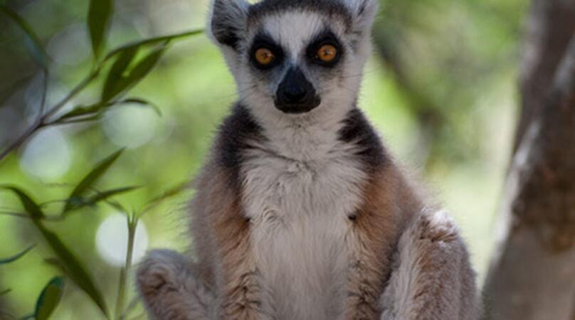 Island of Lemurs: Madagascar - Image - Image 29
