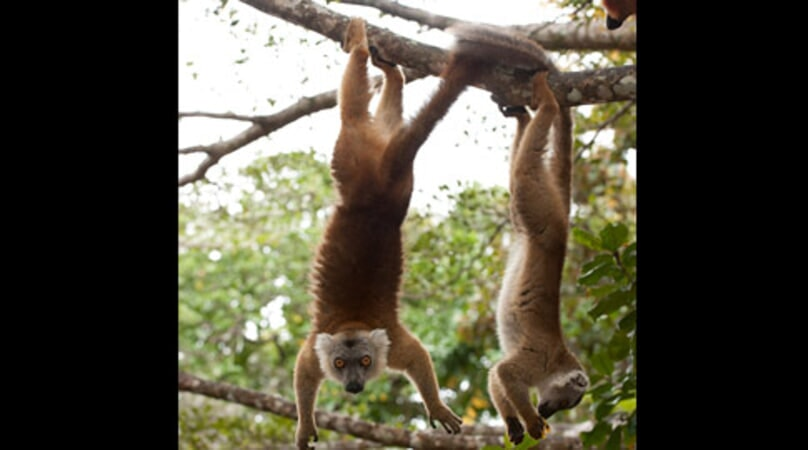 Island of Lemurs: Madagascar - Image - Image 32