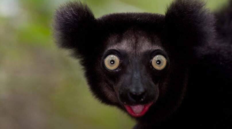 Island of Lemurs: Madagascar - Image - Image 33