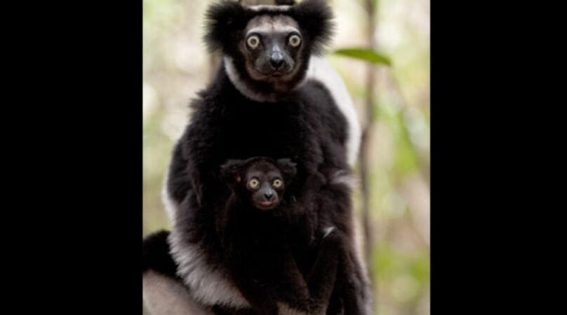 Island of Lemurs: Madagascar - Image - Image 34