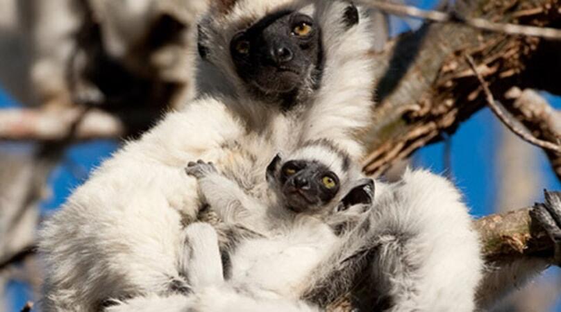 Island of Lemurs: Madagascar - Image - Image 35