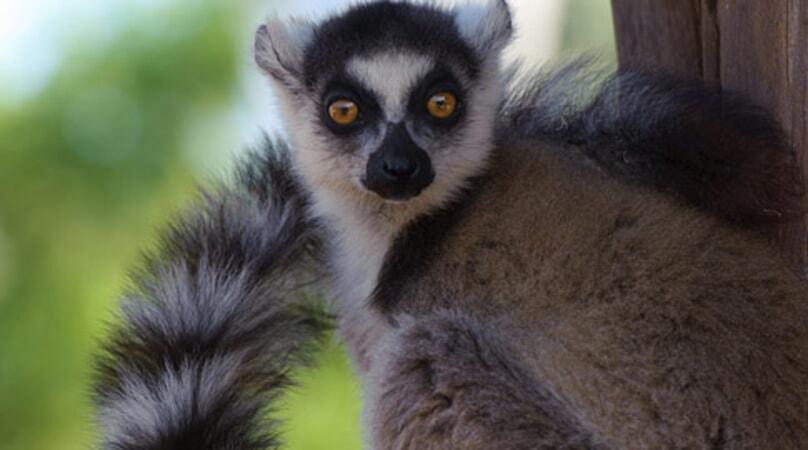 Island of Lemurs: Madagascar - Image - Image 36