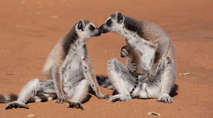 Island of Lemurs: Madagascar - Image - Image 37