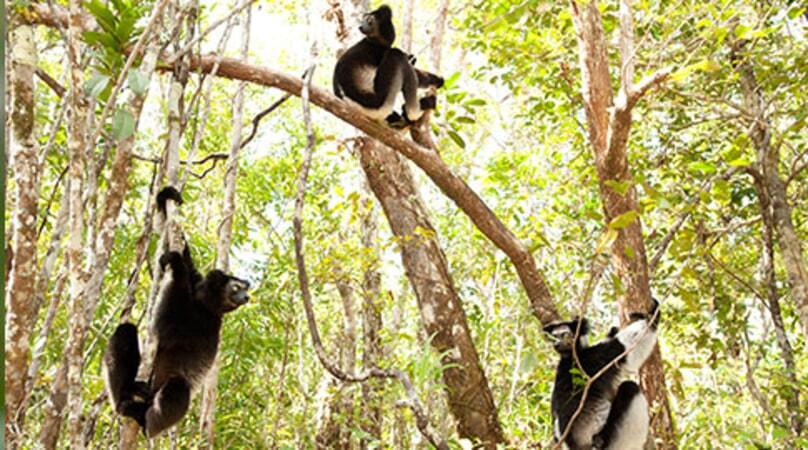 Island of Lemurs: Madagascar - Image - Image 5
