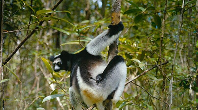 Island of Lemurs: Madagascar - Image - Image 42