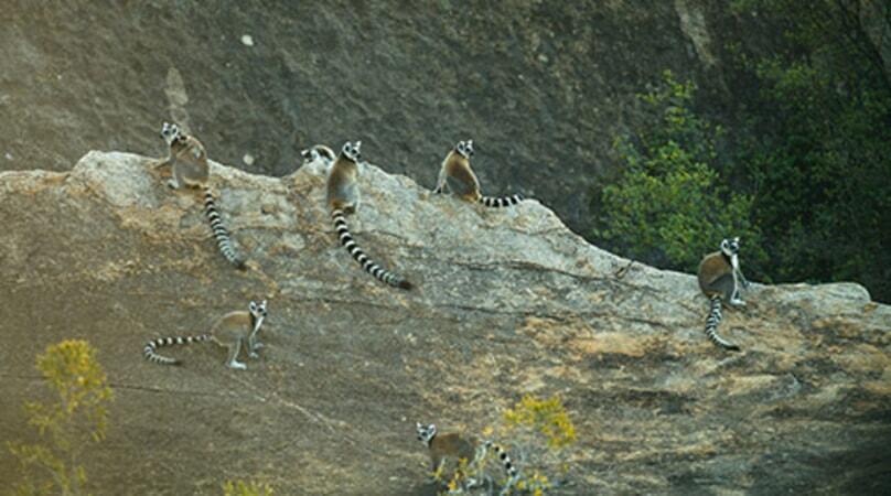 Island of Lemurs: Madagascar - Image - Image 44