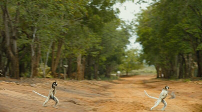 Island of Lemurs: Madagascar - Image - Image 46
