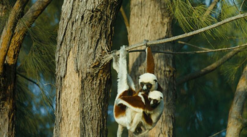 Island of Lemurs: Madagascar - Image - Image 47