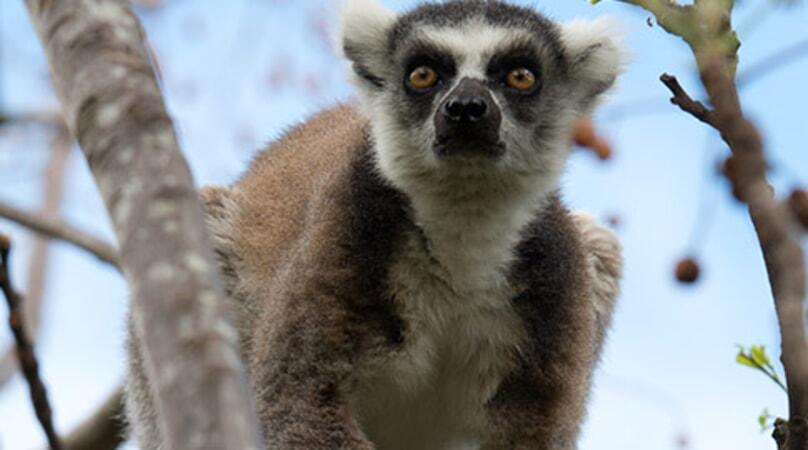 Island of Lemurs: Madagascar - Image - Image 8