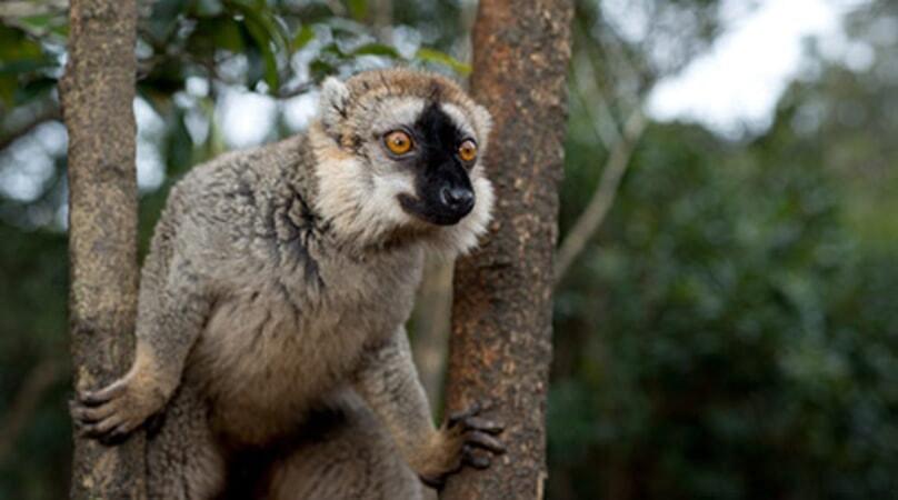 Island of Lemurs: Madagascar - Image - Image 10