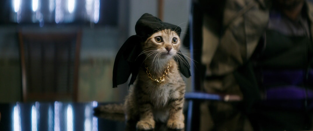 Keanu the kitten dressed up with a gold chain