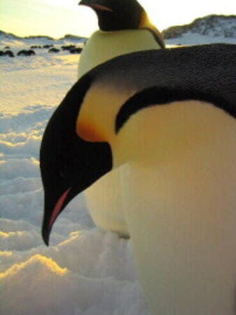 March of the Penguins - Image - Image 10