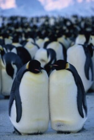 March of the Penguins - Image - Image 13