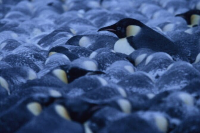 March of the Penguins - Image - Image 14
