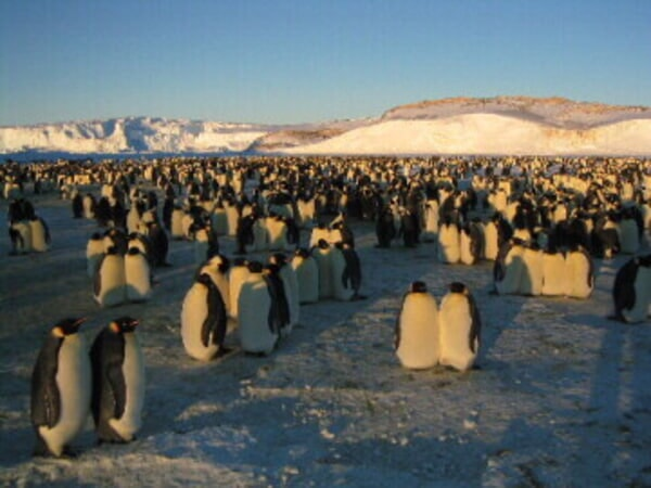 March of the Penguins - Image - Image 18