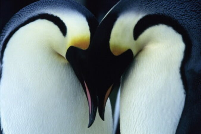 March of the Penguins - Image - Image 19