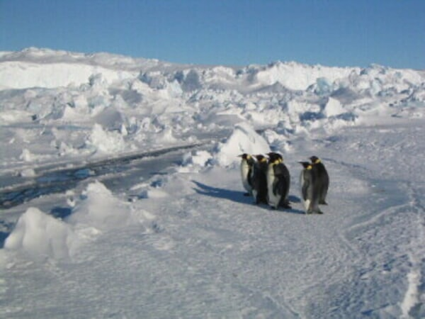 March of the Penguins - Image - Image 20