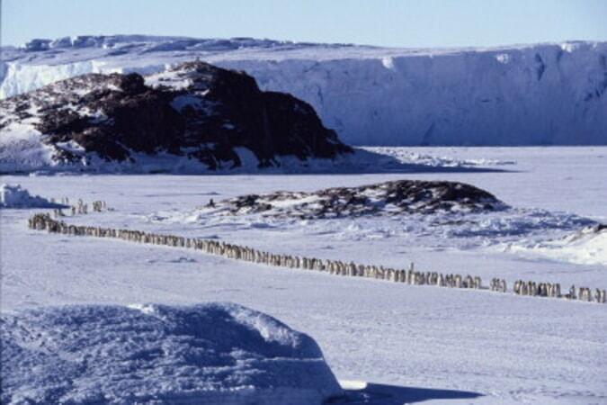 March of the Penguins - Image - Image 21