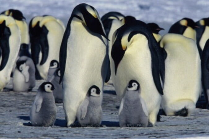 March of the Penguins - Image - Image 23