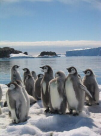 March of the Penguins - Image - Image 25