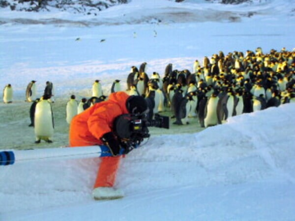 March of the Penguins - Image - Image 27