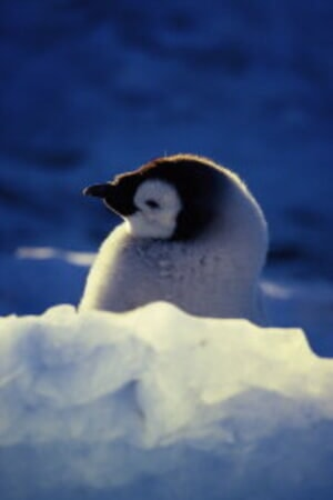 March of the Penguins - Image - Image 28