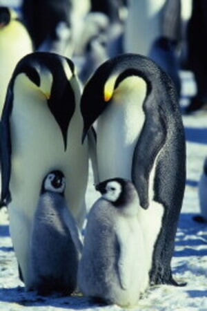 March of the Penguins - Image - Image 29