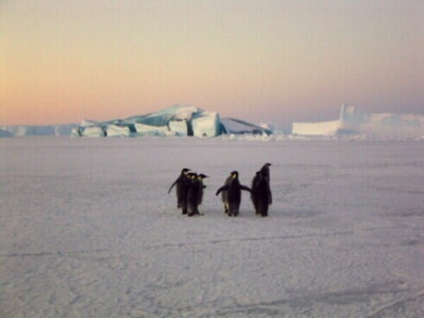 March of the Penguins - Image - Image 6