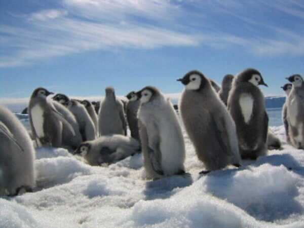 March of the Penguins - Image - Image 9