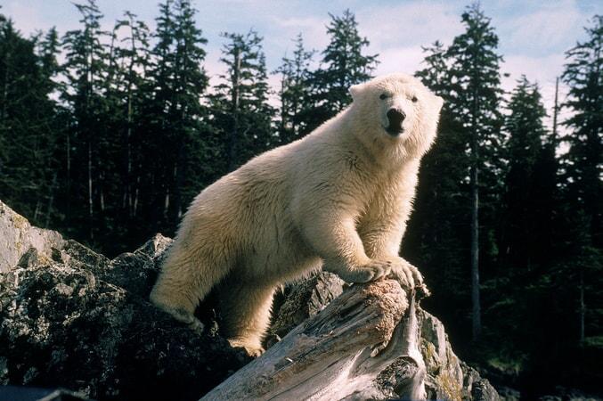 Alaska - Image - Image 2