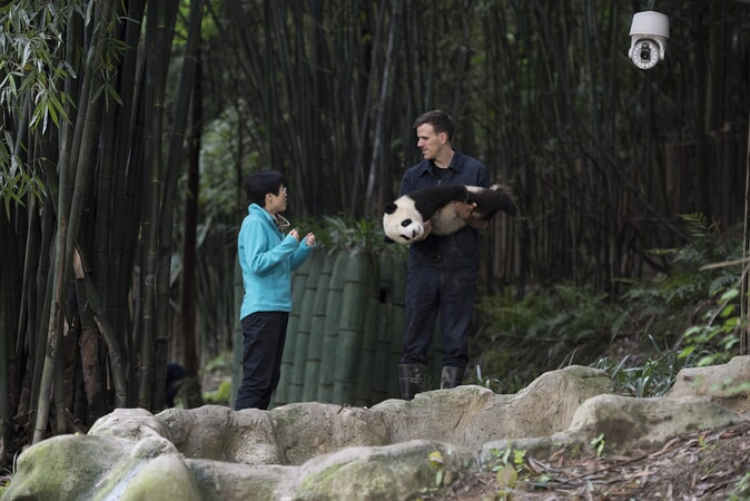 (L-R) HOU RONG (Director of Research at Chengdu Panda Base) talks with DR. JAKE OWENS, Ph.D. (wildlife conservation biologist) as he holds a Giant Panda cub at Panda Valley in Dujiangyan, China as seen in the new IMAX® film, PANDAS