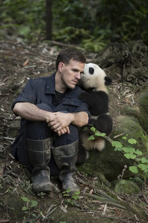 DR. JAKE OWENS, Ph.D. (wildlife conservation biologist) and a Giant Panda at Panda Valley in Dujiangyan, China as seen in the new IMAX® film, PANDAS