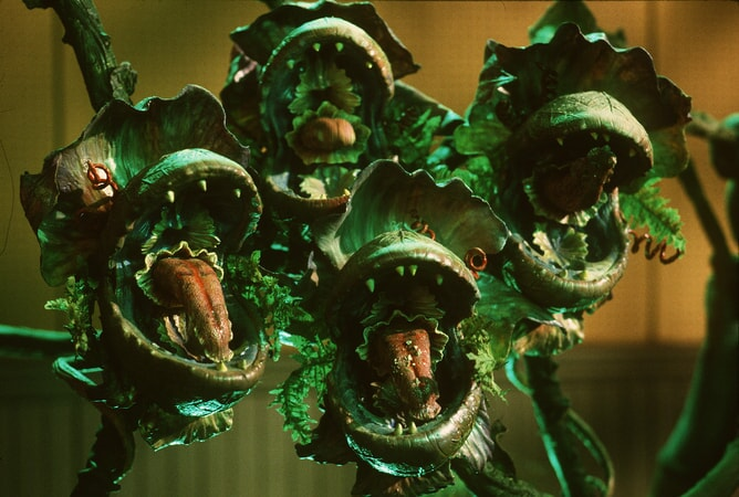 Little Shop of Horrors - Image - Image 14
