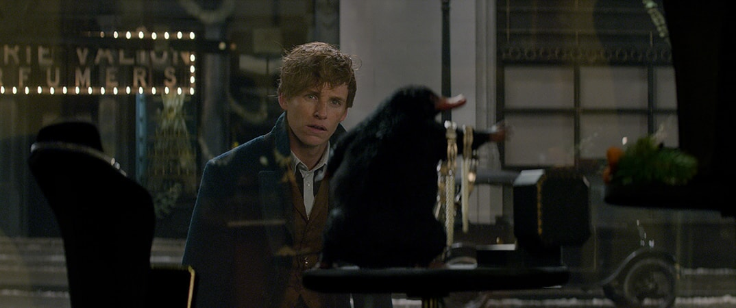 "EDDIE REDMAYNE as Newt Scamander and a beast called a Niffler in Warner Bros. Pictures' fantasy adventure ""FANTASTIC BEASTS AND WHERE TO FIND THEM,"" a Warner Bros. Pictures release."